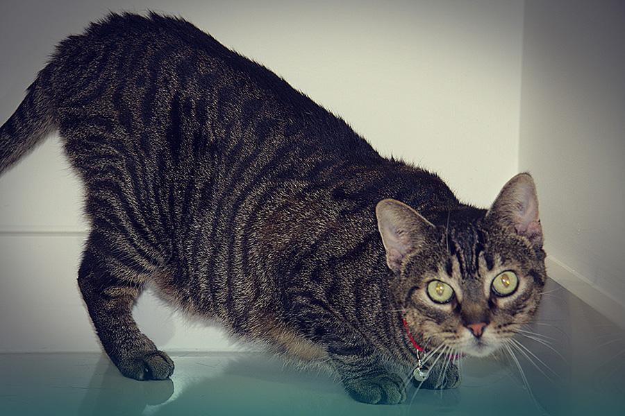 Consultório Gato